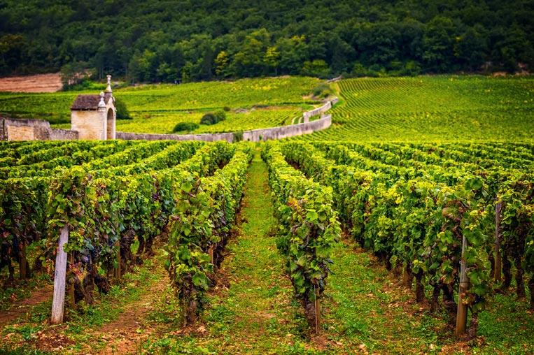 Burgundy,-Vineyard-02.jpg