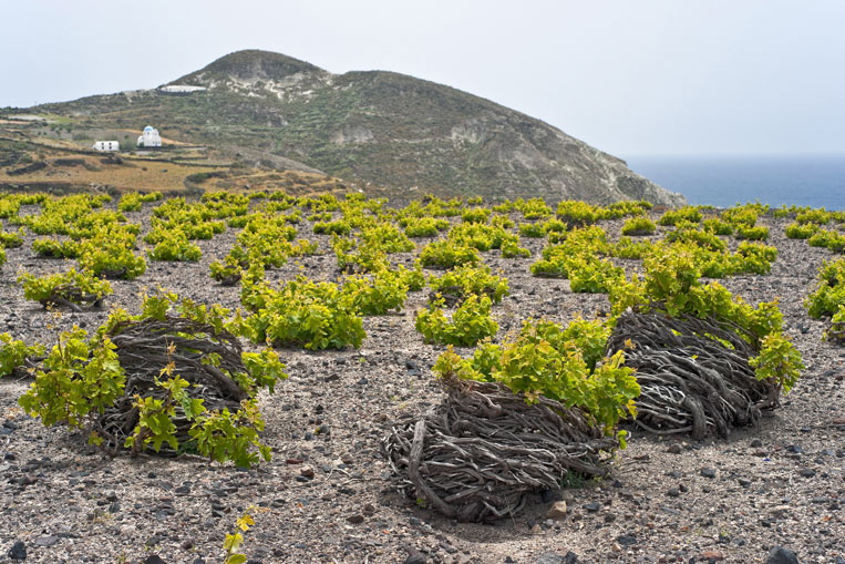 Santorini-vineyard-shutters.jpg