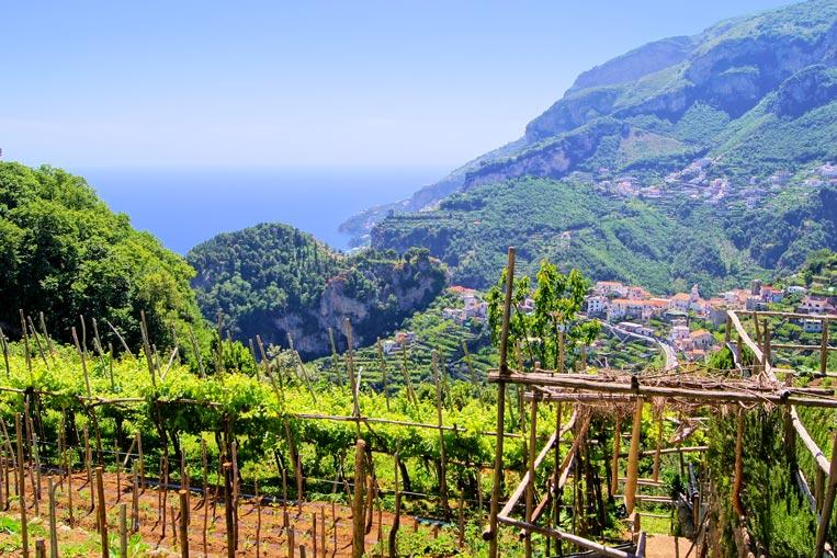 Amalfi-Coast,-Ravello,-Vine.jpg