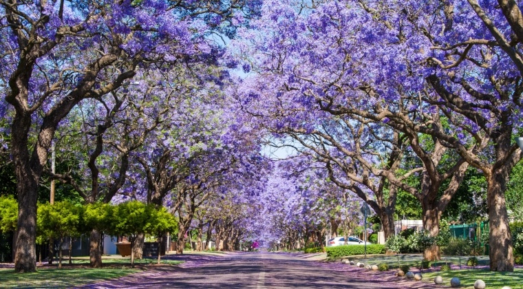 Johannesburg, Pretoria-01-890263-edited.jpg