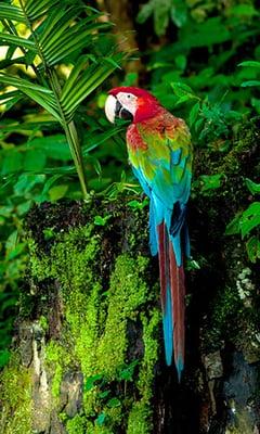 amazon macaw image00001WEB
