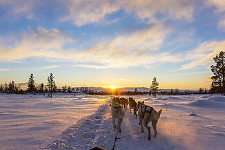 trips to scandinavia dog sled