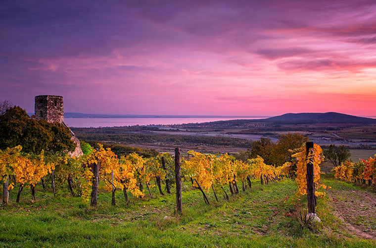 Hungary wine travel